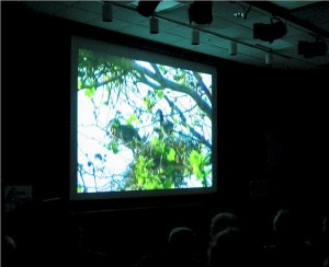 film_debut_herons